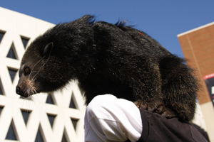 Lucy The Bearcat